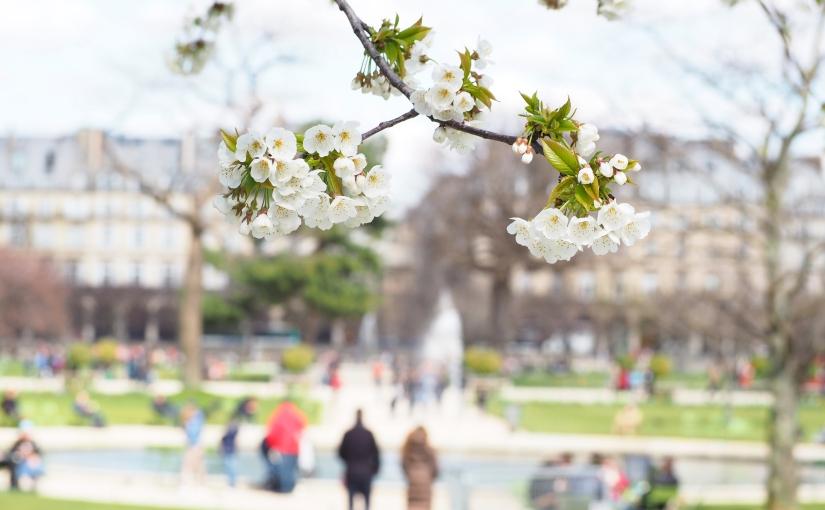 Photo Diary – Paris inSpring