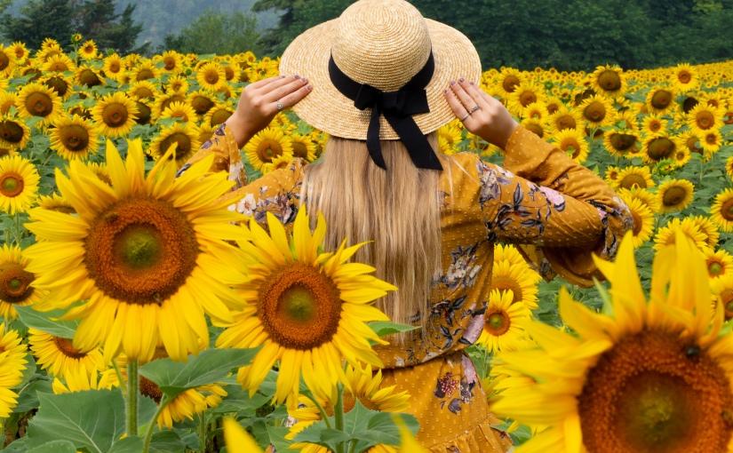 Photo Diary – Sunflower field inTuscany
